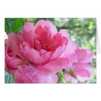 Cartes Doucement amitié de rose de rose