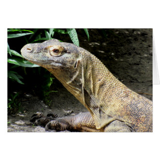 Cartes Dragon de Komodo (0804)