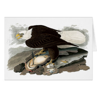 Cartes Eagle à tête blanche | John James Audubon