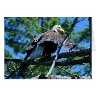 Cartes Eagle humide