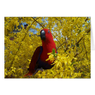 Cartes Eclectus en jaune -- Grand