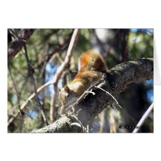 Cartes Écureuil curieux