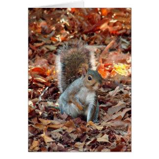 Cartes Écureuil d'automne