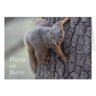 Cartes Écureuil de accrochage
