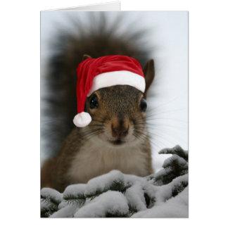 Cartes Écureuil drôle utilisant le casquette de Père Noël
