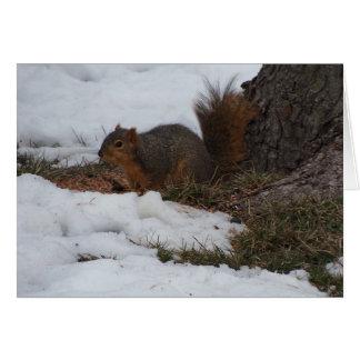 Cartes Écureuil et neige