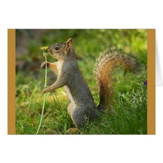 Cartes Écureuil trouvé avec l'image de pissenlit