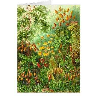 Cartes Ernst Haeckel - Muscinae