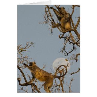 Cartes Escalade de Langur de Hanuman dans l'arbre