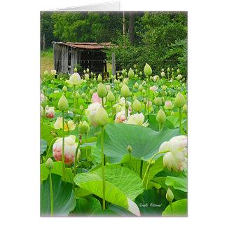 Cartes Étang de Lotus complètement des fleurs de