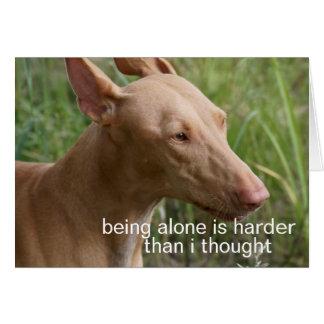 Cartes étant seul chien