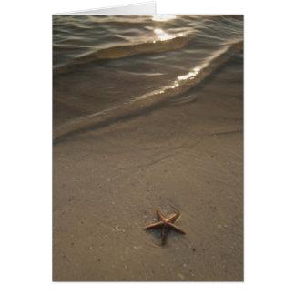 Cartes Étoiles de mer