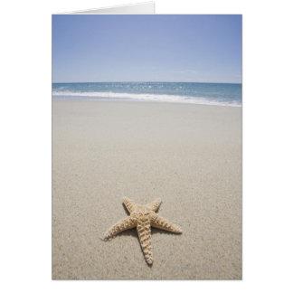 Cartes Étoiles de mer sur la plage par l'Océan Atlantique