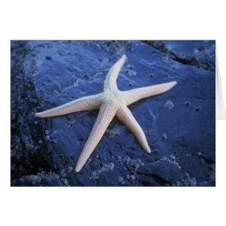 Cartes Étoiles de mer sur la roche de lave