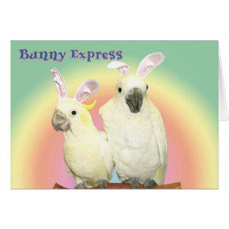 Cartes Express de lapin