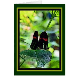 Cartes Facteur rouge : papillon