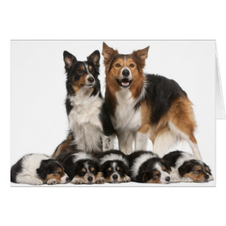Cartes Famille de border collie