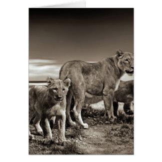Cartes Famille de lion