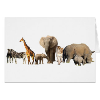Cartes Faune africaine