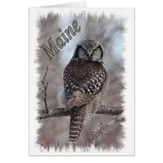 Cartes Faune du Maine - hibou de faucon du nord