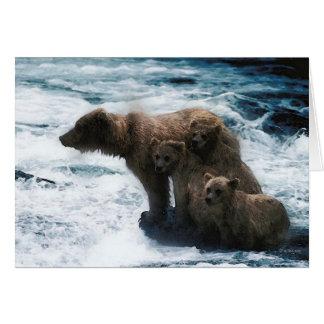Cartes Faune-Famille des ours gris