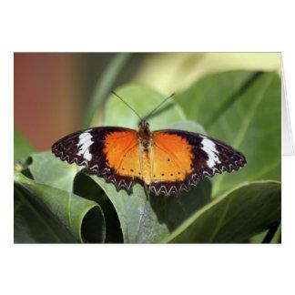 Cartes ferme 2 de papillon