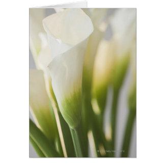Cartes Fermez-vous calalily des fleurs