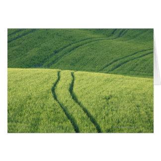 Cartes Fermez-vous du champ de blé avec des voies de