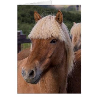 Cartes Fermez-vous d'un cheval islandais