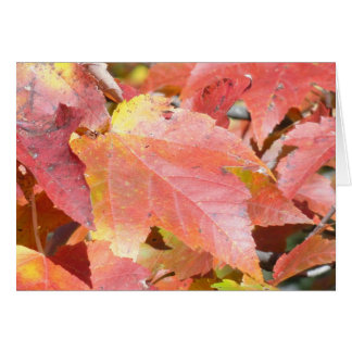 Cartes feuillage d'automne