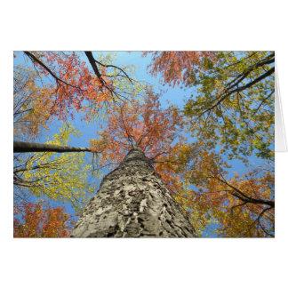 Cartes Feuillage d'automne recherchant