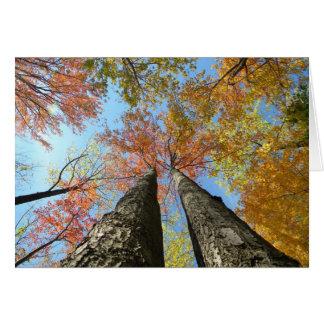 Cartes Feuillage d'automne recherchant 2