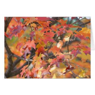 Cartes Feuille d'automne 3