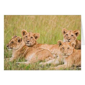 Cartes Fierté de lion CUB