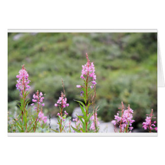 Cartes Fireweed
