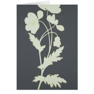 Cartes Fleur