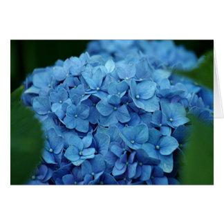 Cartes Fleur bleue d'hortensia