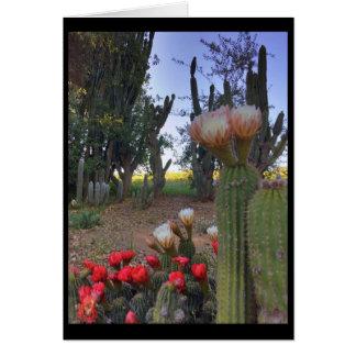 Cartes Fleur de cactus