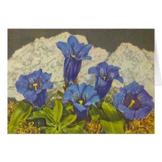 Cartes Fleur de gentiane