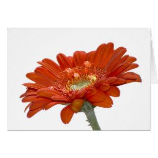 Cartes Fleur de Gerbera de marguerite orange