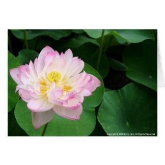 Cartes Fleur de Lotus