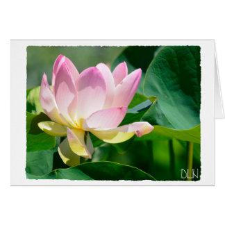 Cartes Fleur de Lotus/art floral