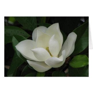 Cartes Fleur de magnolia du sud