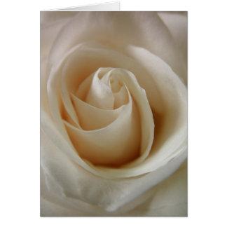 Cartes Fleur ene ivoire de rose blanc