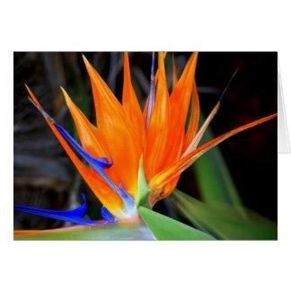 Cartes Fleur : Oiseau du paradis