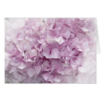 Cartes Fleur rose molle d'hortensia