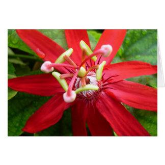Cartes Fleur rouge de passion