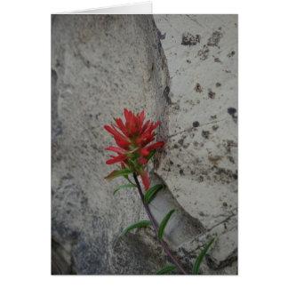 Cartes Fleur rouge de pinceau indien