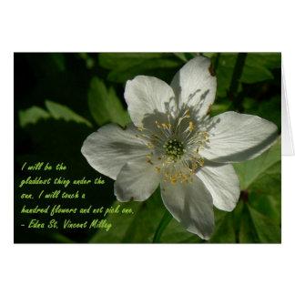 Cartes Fleur sauvage blanc Edna Saint Vincent Mallay