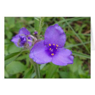 Cartes Fleur sauvage de pourpre de Spiderwort